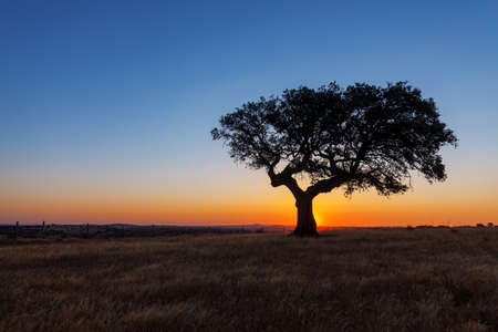 Single tree in a wheat field on a background of sunset, beautiful scenery  photo