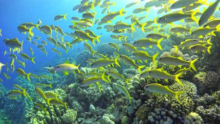 Tropische Vissen op levendige Coral Reef, onderwater scene Stockfoto