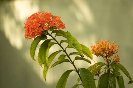 beautiful marigold flower