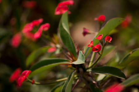 Beautiful red flower with blur background Archivio Fotografico