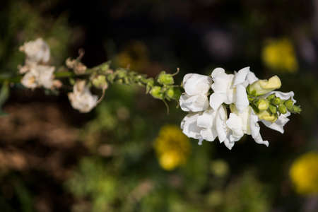 Beautiful flower with white against a blur flower background Archivio Fotografico