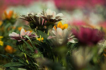 Beautiful flower, green leaves blur background