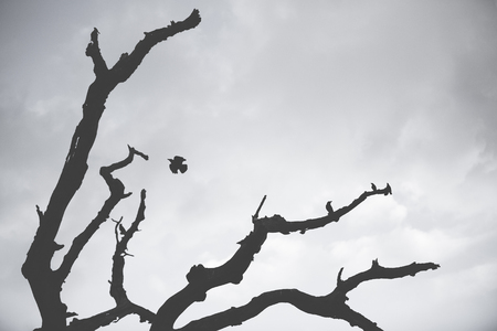 Dead tree and bird silhouette near U Bein bridge