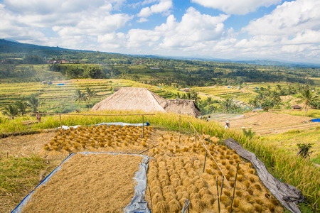 indonesia culture: Scenic view of Jatiluwih rice terrace in Bali, Indonesia Stock Photo