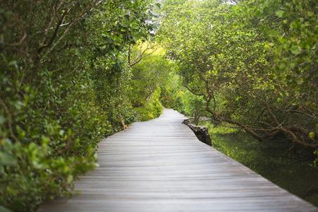 バリ島のマングローブ林におけるパス