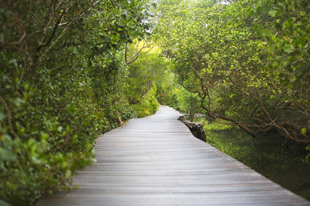 Path in Mangrove forest in Bali