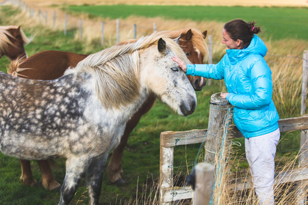animals feeding: Icelandic horses and woman. Girl in coat petting horse in beautiful nature on Iceland. Stock Photo
