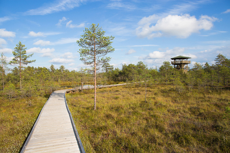mire: View point tower at Large Viru bogs in Lahemaa national park, Estonia