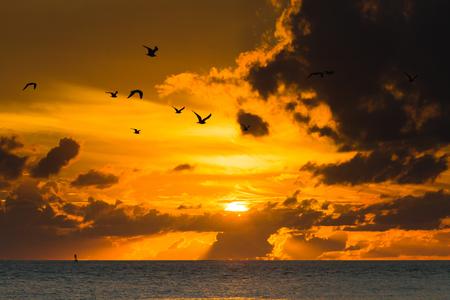 새가에 일몰에서 날으십시오. 미국 피터스 버그