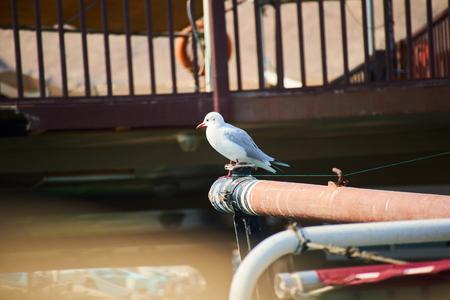 stern: Seagull on stern