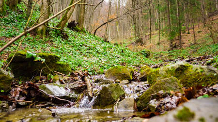 meadow in woods with river Stock Photo