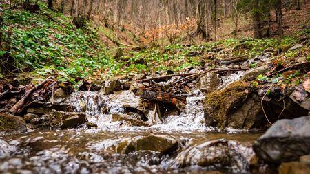 川と森の中の草原 写真素材