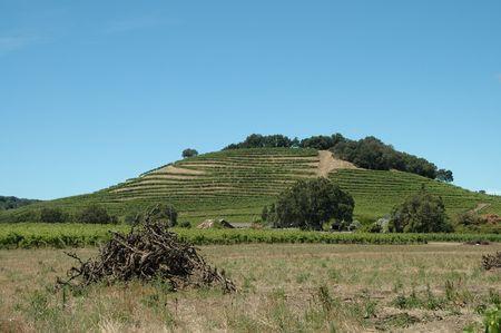 Hillside vineyard, Geyserville, California
