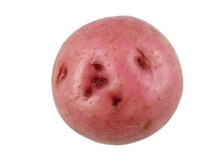 ミニチュア赤ジャガイモ