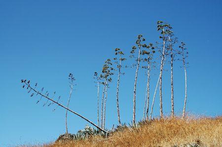 Spindly trees, San Francisco Bay Wildlife Refuge, Fremont, California