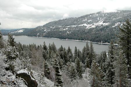 ponderosa pine winter: Donner Pass in winter