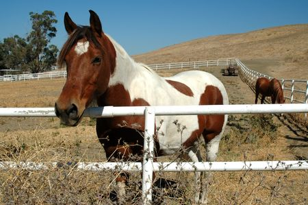 Horse & fence