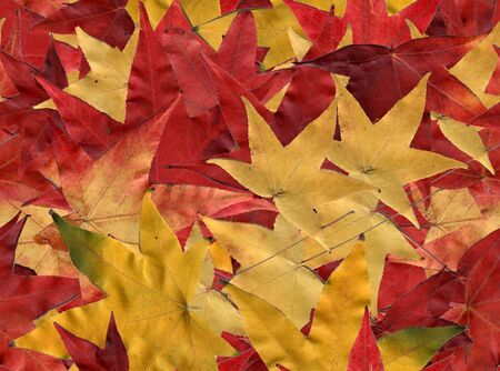 Autumn leaves, tiled to create a seamless background photo