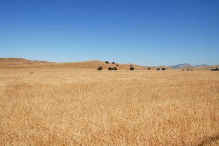 livermore: Grassy field, Livermore, California