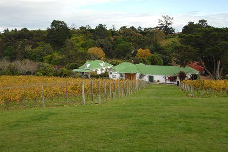 Vineyard and winery, Waiheke Island, New Zealand Фото со стока
