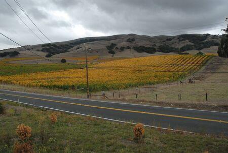 wine road: Fall colors in the vineyard, Sonoma, California Stock Photo