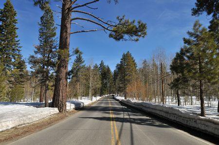 south lake tahoe: Road through the Ponderosa pines near South Lake Tahoe, California