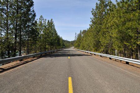 lost lake: Empty road through the evergreens, Lost Creek Lake, Oregon