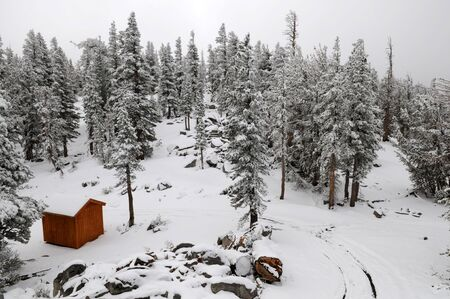 south lake tahoe: Shed in a snow-covered forest, South Lake Tahoe, California