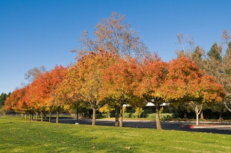 Autumn colors in a Silicon Valley Office Park, Sunnyvale, California