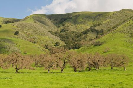 Green hills  barren trees along Pacheco Pass, Hollister, California