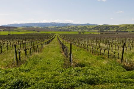 Vineyard in early spring, Livermore, California 免版税图像 - 6589283