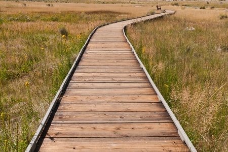 lee vining: Boardwalk across Mono Lake grassland near Lee Vining, California
