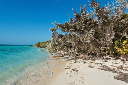 cay: White sand beach, Coco Cay, Bahamas Stock Photo