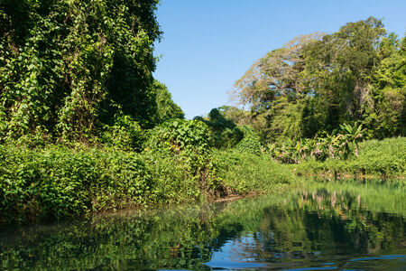 martha: Wilderness along the Martha Brae River, Falmouth, Jamaica