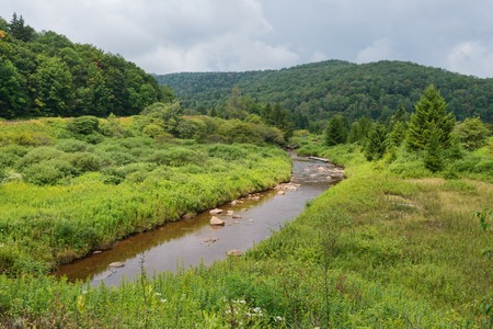 seneca: Shavers Fork of the Cheat River at the former townsite of Spruce, West Virginia