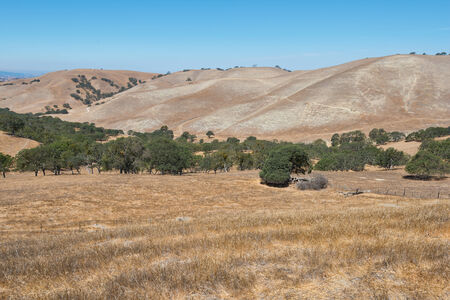 parched: Dry parched hills, Livermore, California