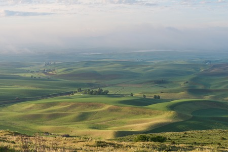 butte: Farmland in early morning, Steptoe Butte State Park, Oakesdale, Washington