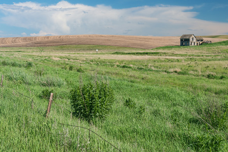 dilapidated: Dilapidated barn and shed among fields of wheat, Oakesdale, Washington