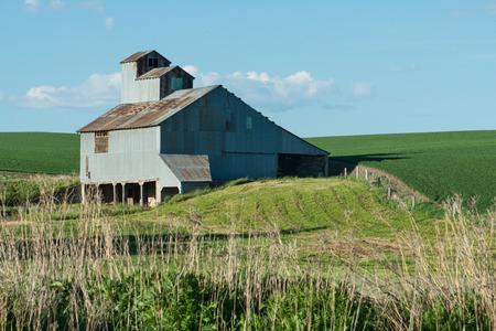 farm structure: Corrugated barn and field, Cashup, Washington Editorial