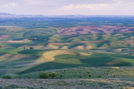 butte: Farmland at dusk, Steptoe Butte State Park, Oakesdale, Washington Stock Photo
