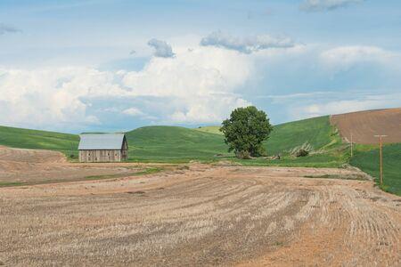 lone  tree: Barn, fields and lone tree near Steptoe, Washington Stock Photo