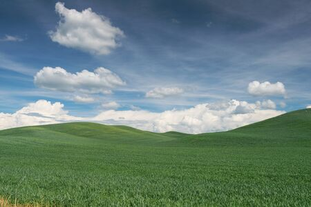 Rolling hills covered in wheat, Colfax, Washington