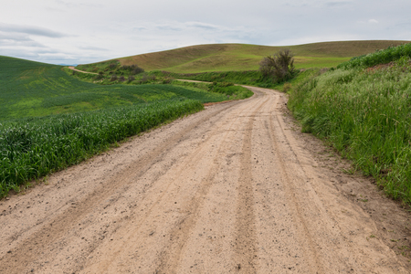 dirt: Dirt road through wheat fields, Pullman, Washington Stock Photo