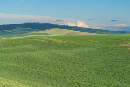 Rolling hills covered in wheat fields, Pullman, Washington