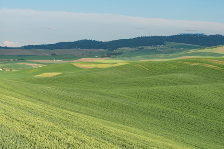 covered fields: Rolling hills covered in wheat fields, Pullman, Washington