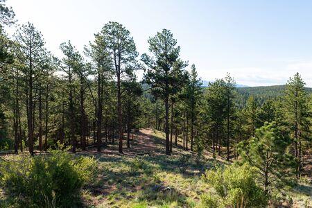 Alpine forest mountain landscape, Florissant, Colorado