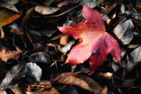 dode bladeren: Fall Foliage in de bodem, op dode bladeren in de winter Stockfoto
