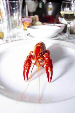 crayfish: Crayfish  Stock Photo