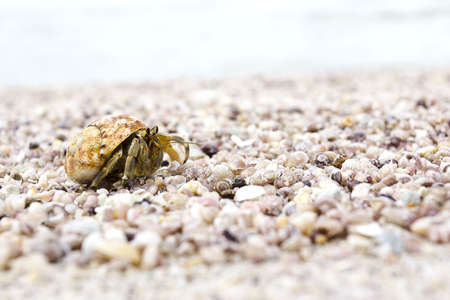There are alot of Hermit crab walk a long the beach at Aow Khao Khwai, Payam island, Ranong Thailand, October 2011