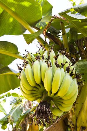 a set of banana and banana leaf